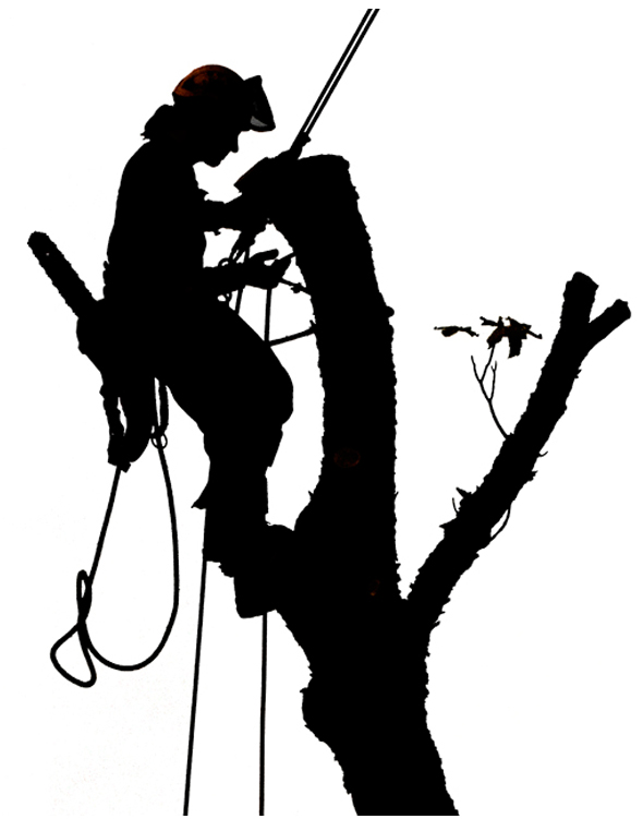 Art Wood Tree Services